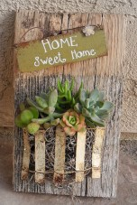 Ideas to arrange your succulent with driftwood 50